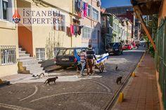 Коты, кошки и котики в Стамбуле #istanbulexpert #turkey #turkiye #iloveistanbul #стамбул Рубрика: #жизньвСтамбуле  Читать далее: http://istanbulexpert.ru/koty-koshki-i-kotiki-v-stambule.html