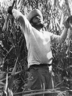 Zafras azucareras en Cuba, peor que un siglo atrás