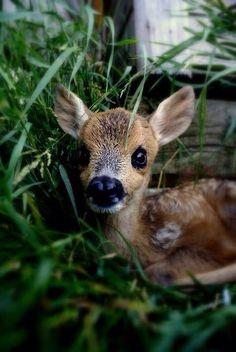 baby deer! afternoon aww