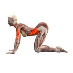 yoga whole body