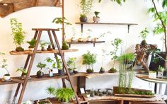 Easy House Plants, House Plants Decor, Plant Decor, Living Room Decor With Plants, Home Plants, Home Office Design, Home Office Decor, Plant Shelves, Shelves With Plants