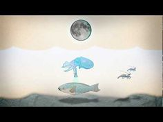 The Hawaiian bobtail squid - when science and nature collide - YouTube