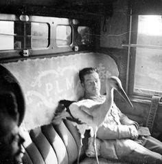 Image unknown, stork in train car (via)