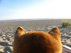 Shiba Vision: a blog that looks at the world from behind these furry ears.