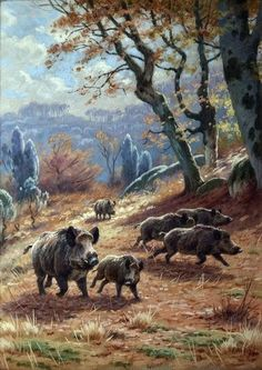 Georges Frédéric Rötig - Wild Boar in autumn forest, gouache, Wild Boar Hunting, Hog Hunting, Hunting Art, Wildlife Paintings, Wildlife Art, Animal Paintings, Hog Dog, Animal Painter, Forest Drawing