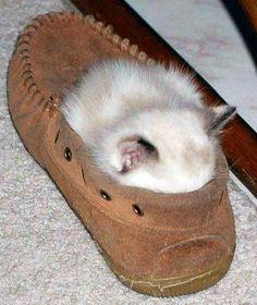 How does that kitten not smell the slipper?
