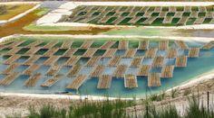 Fitodepurazione: il meccanismo naturale di depurazione delle acque | EcoProspettive