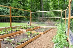 Veggie garden- 8ft Deer Fence using panels