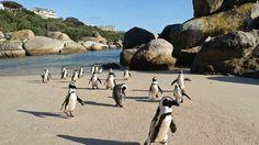 This is Boulder's Beach, Cape Town. Wanna Go??? Worlds 100 best beaches: Top 25 - CNN.com
