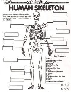 Collection of Human Skeletal System Worksheets - Bloggakuten