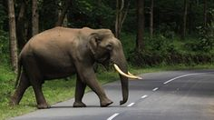 Muthanga wildlife Sanctuary - a place to spot Elephants and deers at Sulthan Bathery, Wayanad | Kerala Tourism