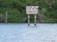 Merritt Island, FL Melbourne Florida, Florida City, Merritt Island, Manatee, Cities, Travel Photography, Wildlife, Daughter, Dreams