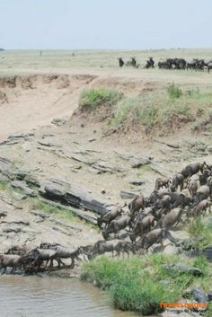 African Wildlife Migrations You Can't Miss - One of the continent's biggest draw cards, the annual migration springs to life in the Serengeti National Park in October, the steady stream of game flowing onto the endless plains | TravelDudes Social Travel C