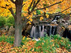 Beautiful landscapes around the world - Beautiful Scenic Spots Photo Wallpapers 10 Tree Wallpaper, Photo Wallpaper, Nature Wallpaper, Chicago Botanic Garden, Colorful Trees, Photo Tree, Autumn Trees, Fall Leaves, World Best Photos
