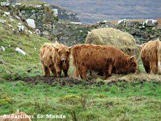 Ilha de Skye - Andarilhos do Mundo