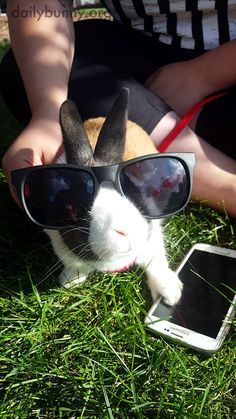 Bunny's got his sunglasses and phone and is ready to go - November 16, 2017