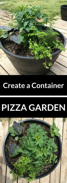 Create a Container Pizza Garden - We'll show you how easy it is to create and grow what you need for family pizza night #gardensnotlandfills #ad
