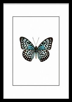 Here you will find animal posters and prints with elephants, cats, lions, butterflies and wildlife. Find your favourite animal art at Desenio! Butterfly Drawing, Butterfly Wall Art, Vintage Butterfly, Pink Butterfly, Butterfly Black And White, Black And White Drawing, Black White, Wallpaper Mariposas, Butterflies
