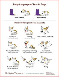 Dog Bite Prevention Tips For Kids There is always body language to warn you preceding a dog bite. Learn the signs, and educate your children.There is always body language to warn you preceding a dog bite. Learn the signs, and educate your children. Dog Body Language, Dog Anxiety, Dogs With Anxiety, Anxiety Quotes, Social Anxiety, Dog Training Tips, Safety Training, Toilet Training, Dog Training