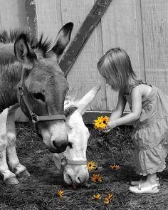 Feeding Donkeys!!! my granddaughters enjoy feeding our donkey.