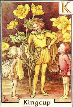 The Kingcup Flower Fairy - Cicely Mary Barker
