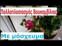 Garden Works, Garden Plants, Gardening, Stuffing, Youtube, Flower, Ribbons, Plant, Lawn And Garden