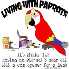so true, funny and SOOOO very worth it for ANYONE that owns and loves their parrots dearly! <3 <3