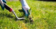 Kill weeds with 10 oz borax and 2 1/2 gallons of water. Don't hit desirable plants with the spray.