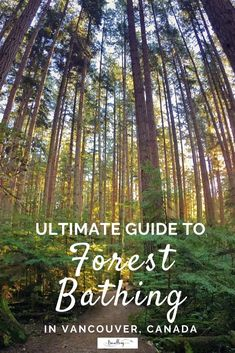 Kids Health Forest bathing in Vancouver is easy and accessible to health conscious travellers. All you need is a pair of walking shoes and desire to get back to nature. Toronto, Travel Couple, Family Travel, Family Camping, Quebec, Calgary, Montreal, Vancouver Travel, Downtown Vancouver