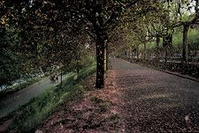 William Albert Allard - Blossoming apricot trees, Valentino Park, Turin, Italy, 2001