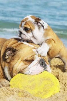 Beach with mom! #Bulldogs