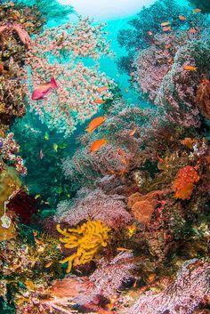 underwater by Song Heming - Stocksy United Underwater Creatures, Underwater Life, Ocean Creatures, Beneath The Sea, Under The Sea, Ocean Wallpaper, Beyond The Sea, Water Animals, Sea Fish