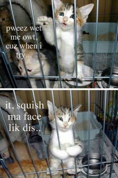 Haha stupit cat :-)