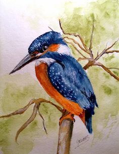 "Original Watercolor 8x10 ""The Beautiful Kingfisher"" by Grimes #Realism"
