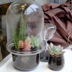 Les terrariums : un monde en miniature et en vase clos