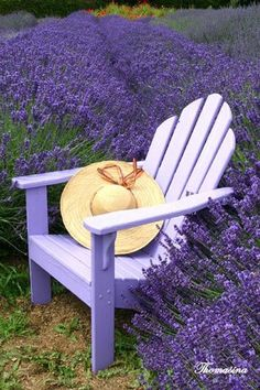 Lavender-what a lovely place to sit a spell