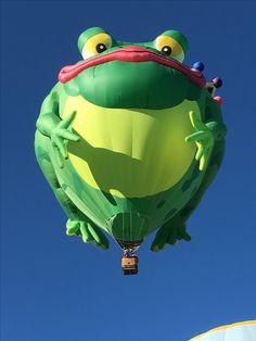 Frog: Autumn Aloft 2016