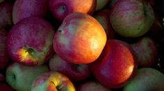 #Quebec apple growers struggle to contain disease affecting trees - CTV News: CTV News Quebec apple growers struggle to contain disease…