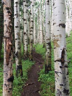 Lockett Meadow, Coconino County, Arizona - A beautiful hike near...