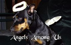 My Angel Always