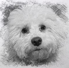 Milly - Sketch app