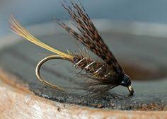 Brown wing wet