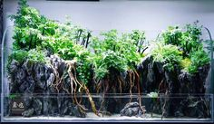 Favourites: Paludarium by 汪智良 Great layout. See more pictures of it here.