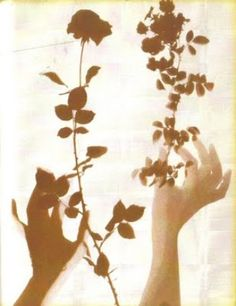 artceteramag: Grand Herbier D'Ombres (1972), by Lourdes de Castro
