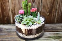 Planting A Simple Cacti Garden  - A Beautiful Mess