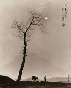 Don Hong-Oai, beautiful!