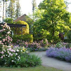 #rosegarden #gardaenlover #coppicegarden