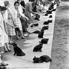 Black cat casting call.. #auditions