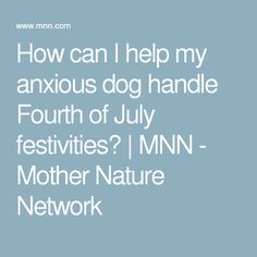 How can I help my anxious dog handle Fourth of July festivities? | MNN - Mother Nature Network