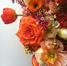 orange flowers//ginny branch